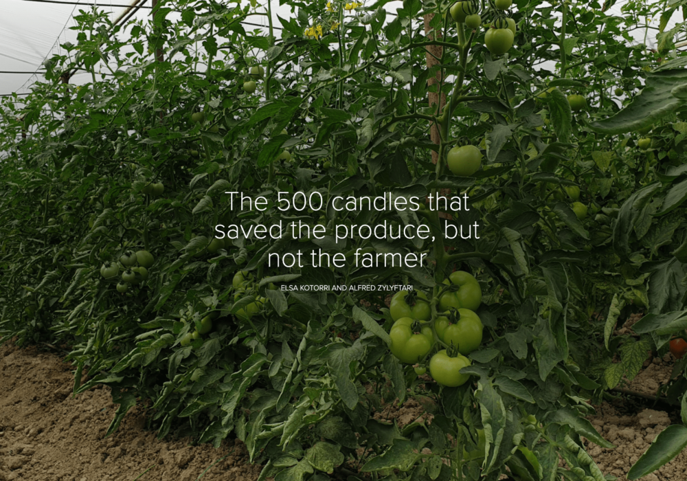 The 500 candles that saved the produce, but not the farmer