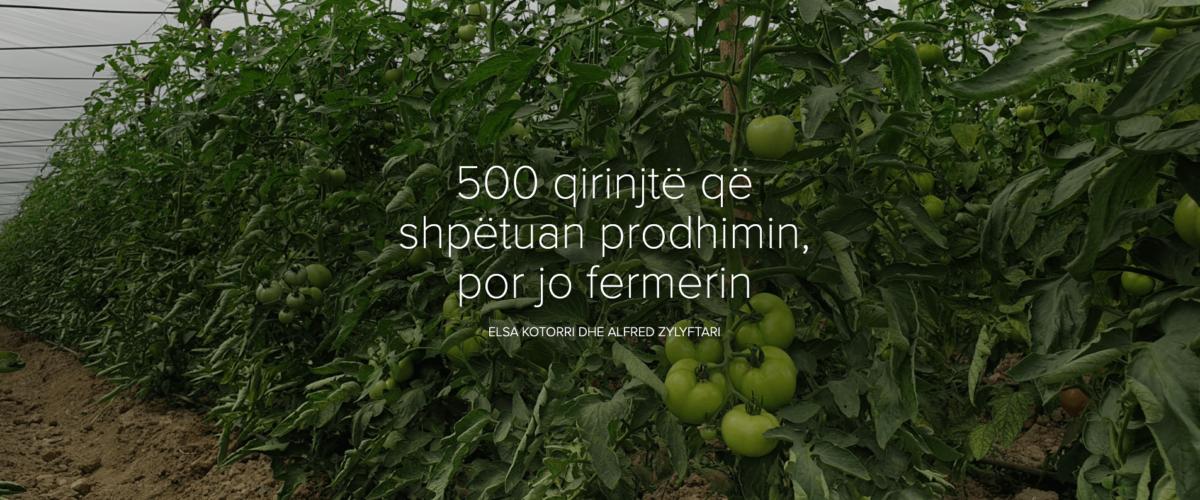 500 qirinjtë që shpëtuan prodhimin, por jo fermerin